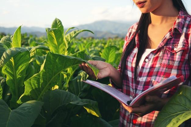 De landbouwers houden notitieboekjecontrole moderne tabaksgebieden. Gratis Foto
