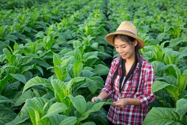 De landbouwkundigevrouw kijkt tabak op het gebied. Gratis Foto