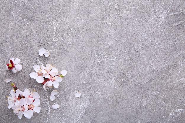 De lente bloeiende takken op een grijze concrete achtergrond. Premium Foto