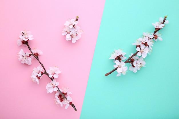 De lente bloeiende takken op een kleurrijke achtergrond. Premium Foto