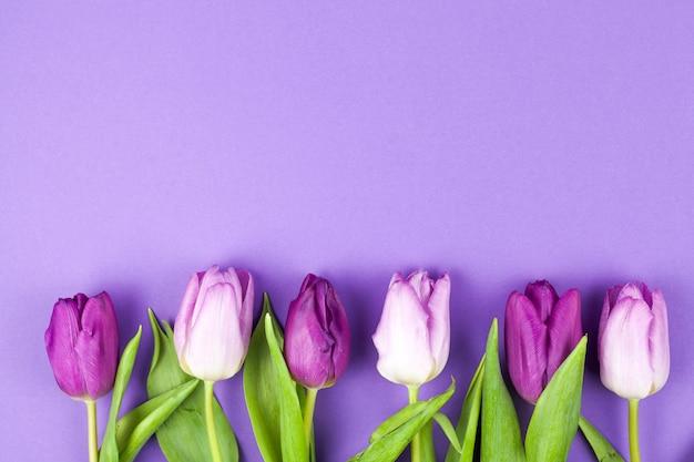 De lente mooie die tulp op een rij over purpere oppervlakte wordt geschikt Gratis Foto
