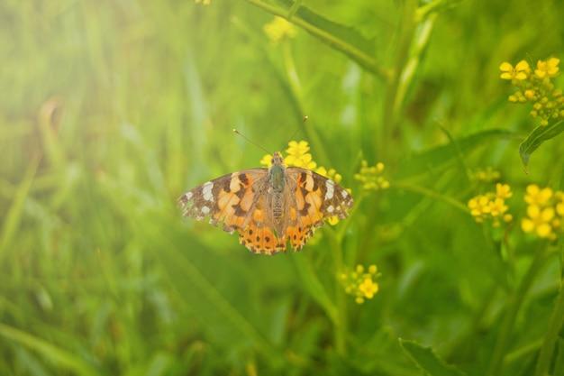 De lentevlinder op een bloem Premium Foto