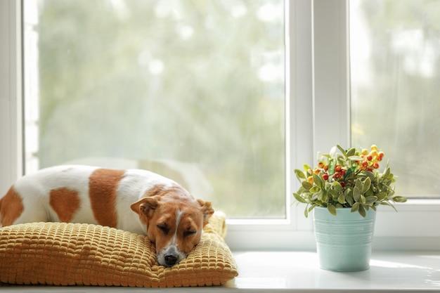 De leuke hond slaapt op het venster en wacht op de eigenaar. Premium Foto