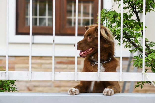 De leuke hond ziet eruit en wacht op eigenaar op omheining Premium Foto