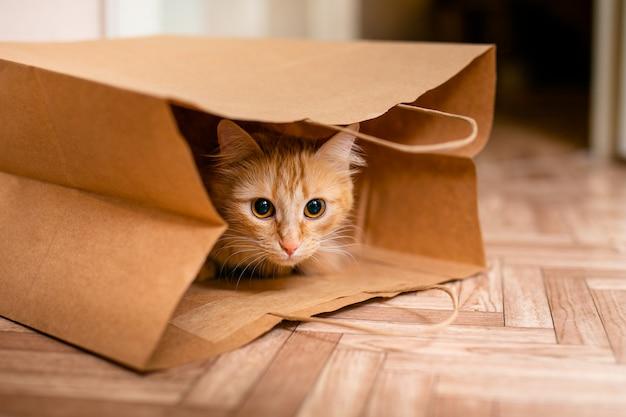 De leuke zitting van het babykatje binnen van de zak van de pakpapierkruidenierswinkel Premium Foto