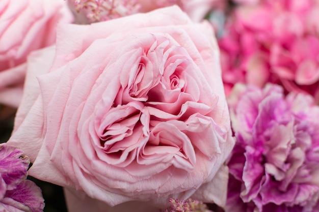 De macro gevoelige verse roze pioen nam bloem toe Premium Foto