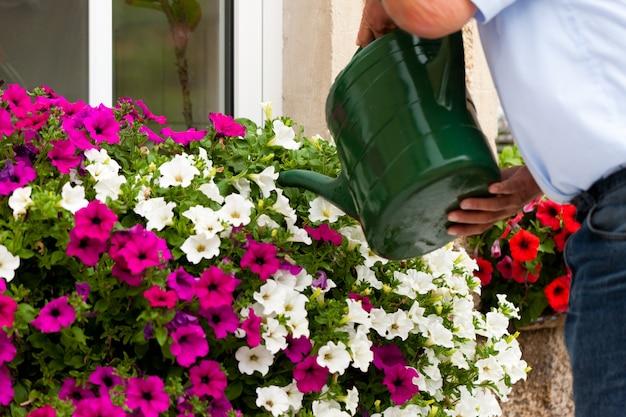 De mens geeft bloemen water Premium Foto