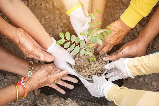 De mensen die de boom planten voor vieren koningsverjaardag van thailand Premium Foto