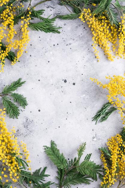 De mimosa vertakt zich kader op een grijze achtergrond Premium Foto