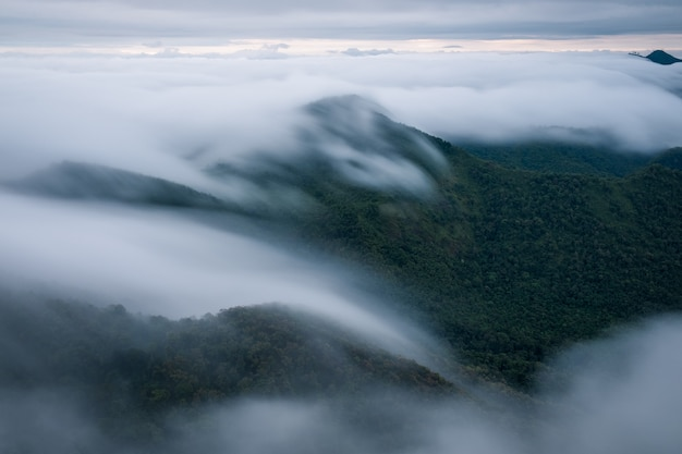 De mist bedekte het bos in de ochtend in khun yuam, thailand Premium Foto