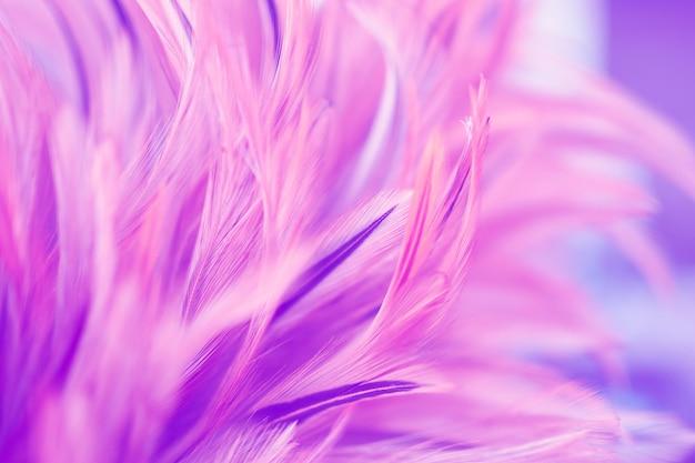 De mooie roze textuur van de kippenveer voor achtergrond. vervag de styls en zachte kleuren Premium Foto