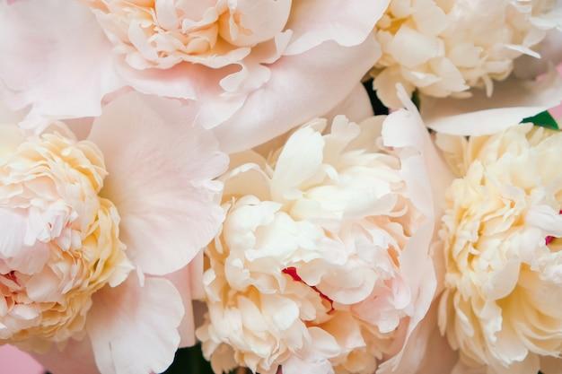 De mooie witte pioen bloeit close-up. bovenaanzicht plat leggen Premium Foto
