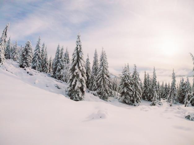 De mooiste oekraïense natuur Premium Foto