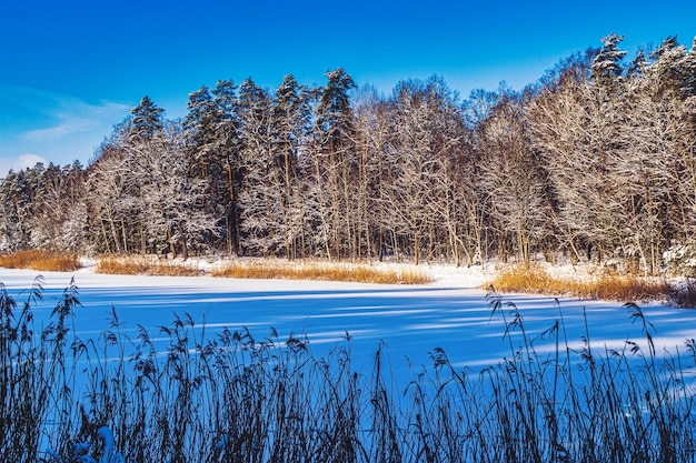 De oever van een bevroren meer in zonlicht Premium Foto