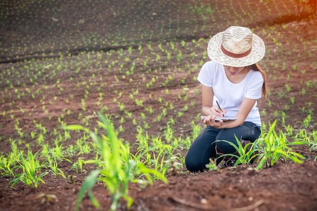 De onderzoekers van de mooie vrouwenplant controleren en nemen nota's op de gebieden van graanzaailingen. Premium Foto