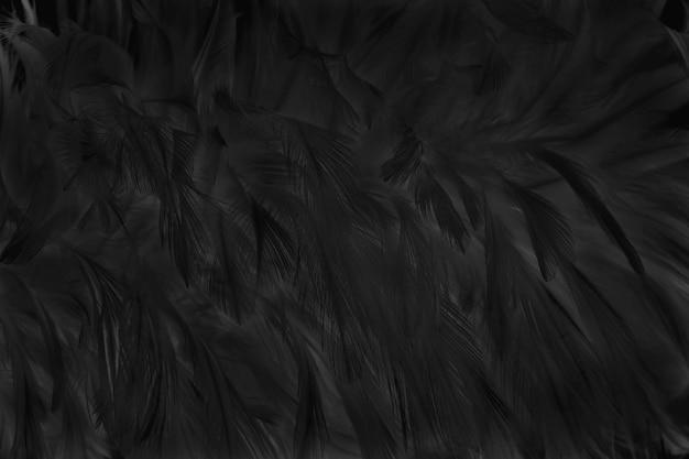 De oppervlakte van onduidelijk beeld mooie zwarte grijze vogelveren voor achtergrond Premium Foto