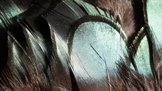 De organische achtergrond van close-up glanzende veren Gratis Foto