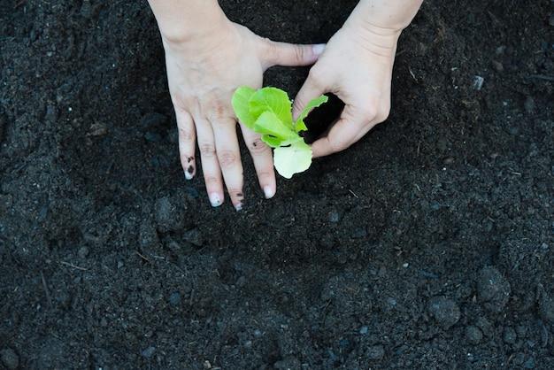 De organische echte scène van de eiken slaaanplanting Premium Foto