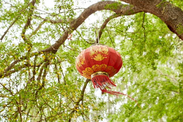 De perenbloemen die in de lente bloeien Premium Foto
