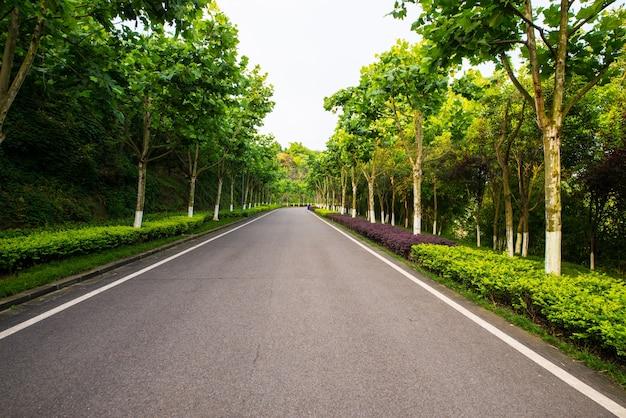 De prachtige weg is omgeven door groen Gratis Foto
