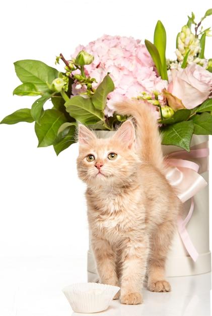 De rode of witte kat ik op witte studio met bloemen Gratis Foto