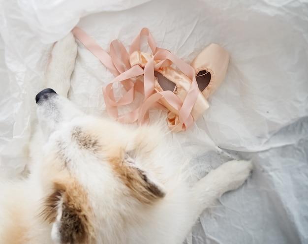 De roze satijnen balletschoenen zetten naast de hond Premium Foto