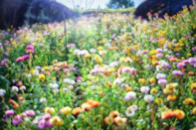 De samenvatting vage tak van de de bloeiboom van de aardbloem met zonsopgangachtergrond. Premium Foto