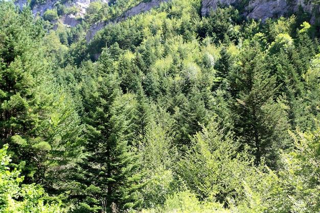 De scenics van de de bomen bosberg van de pyreneeën Premium Foto