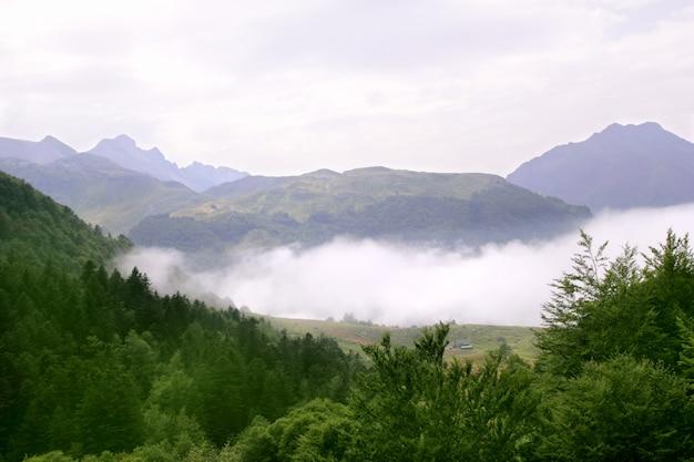 De scenicsaard van de mistige bergen bosmist Premium Foto