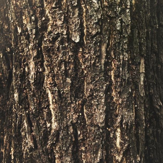 De schors op een boom Gratis Foto