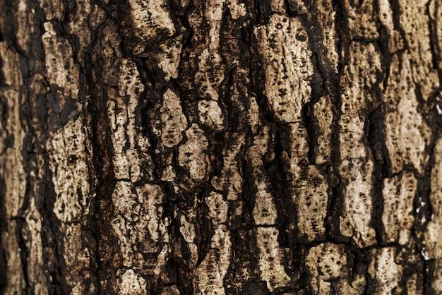 De schors van een boomachtergrond Gratis Foto