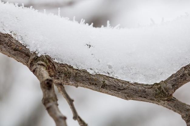 De sneeuw op de takken close-up, winterweer Gratis Foto