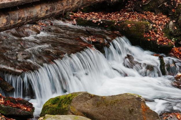 De stroomversnelling van de bergrivier bij de herfst majestueus bos met gevallen bladeren Premium Foto