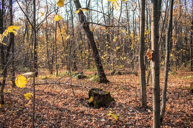 De textuur van de achtergrond stomp bosbladeren achtergrond de herfst Premium Foto