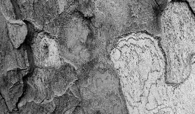 De textuur van de boomschors in zwart-wit Gratis Foto