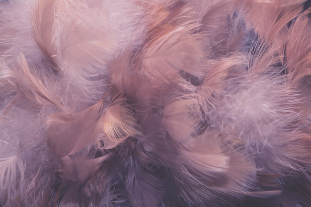 De textuur van de de kippenveer van de onduidelijk beeldvogel voor achtergrond, fantasie, abstracte, zachte kleur van kunstontwerp. Premium Foto