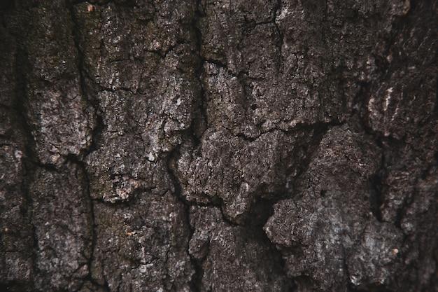 De textuurachtergrond van de hulp van de bruine schors van een boom. wallpaper voor apparaat Premium Foto