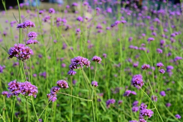 De tuinman geeft de bloemen water in het park Premium Foto