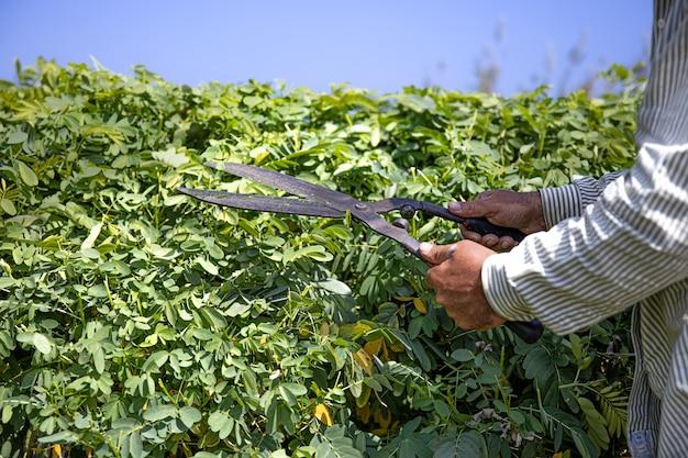 De tuinman snijdt de struik met een grote snoeischaar. Gratis Foto