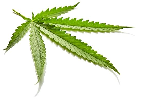 De ventilatorblad van de cannabis op wit Premium Foto