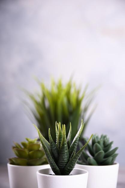 De verschillende vorm van het kunstbloemengras in een pot op houten dichte omhooggaand als achtergrond met exemplaarruimte en tekst Premium Foto