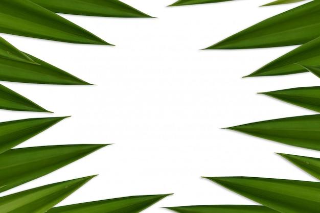 De verse groene pandanbladeren isoleerden witte achtergrond Premium Foto