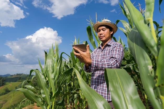 De volwassen tablet van de landbouwersholding op graangebied onder blauwe hemel in de zomer Premium Foto