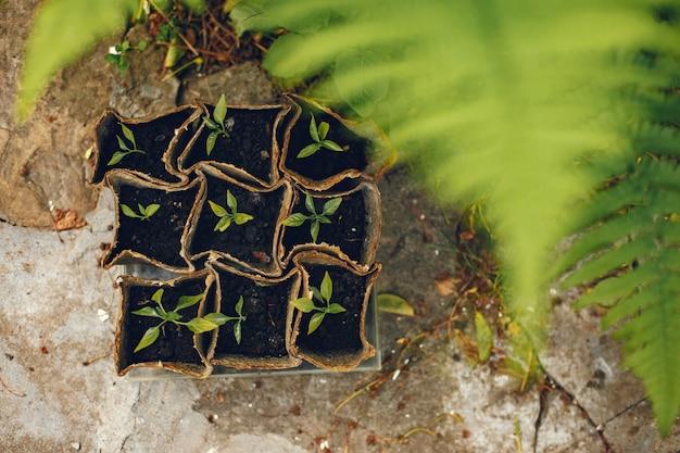 De vrouw dient handschoenen in die jonge plant planten Gratis Foto