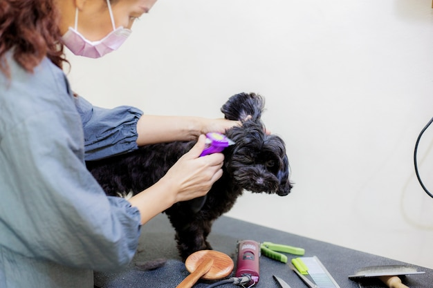 De vrouw is haar een hond op tafel snijden. Premium Foto