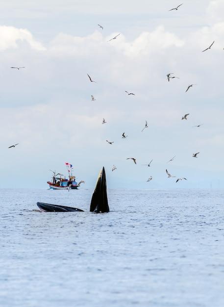 De walvis van bryde, de walvis van eden, die vissen eet bij de golf van thailand. Premium Foto