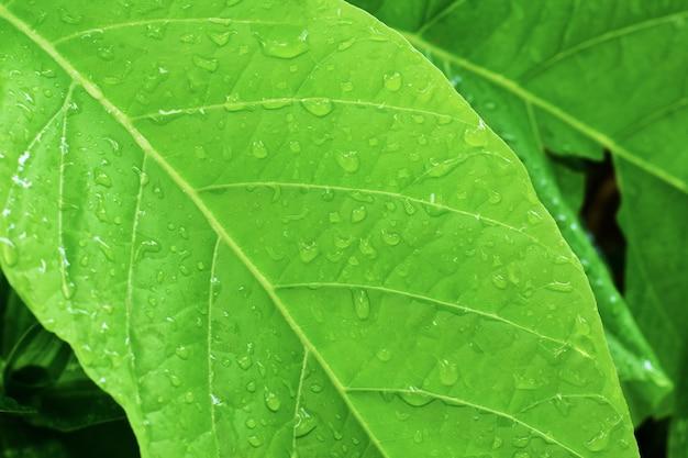 De waterdaling op groen doorbladert achtergrond met groene oppervlakte, doorbladert patroon. Premium Foto