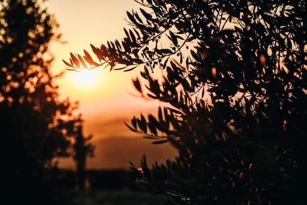 De zon daalt over de velden van het italiaanse toscane Gratis Foto