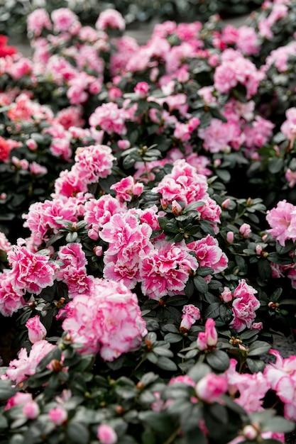 Decoratie met mooie roze bloemen Gratis Foto