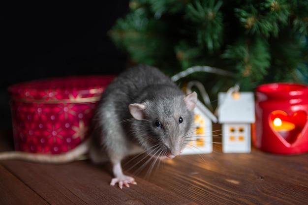 Decoratieve binnenlandse rat zit in de buurt van een kerstboom Premium Foto